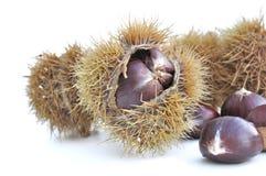 Chesnuts i husk arkivfoton