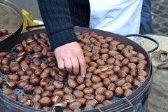 Chesnuts Royalty Free Stock Photos