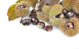 Chesnuts y cáscara dulces en blanco imagen de archivo libre de regalías