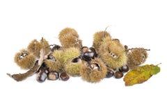 Chesnuts y cáscaras dulces frescos imagenes de archivo