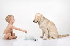 Chess. A boy playing chess with golden retriever Royalty Free Stock Images