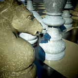 Chess battle. Macro shot of a horse Stock Photography