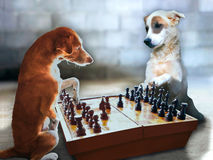 Chess Dogs Royalty Free Stock Image