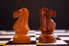 Chess knights on board. White and black knights on chess board Stock Photos