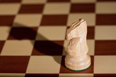 Chess piece - a white knight on a chessboard. Stock Photo