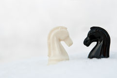 Chess pieces knight Stock Image
