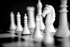 Chess White Knight. Chess pieces, with focus on white knight.  Black and white image Stock Images