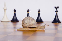 Chessboard with snail and chessmans Royalty Free Stock Photos