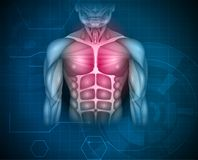 Chest and abdomen muscles. Muscles of the human body, abdomen, chest and arms, beautiful colorful illustration on an abstract blue background stock illustration