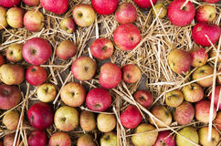 Chest with apples in the straw. Royalty Free Stock Photography