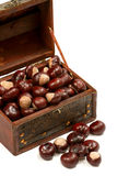 Chest With Chestnut Stock Images