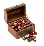 Chest With Chestnut Stock Photos