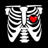 Chest rib vector skeleton heart bone illustration ray xray film. Chest rib vector skeleton heart bone illustration ray xray Stock Photo