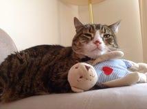 Chester de gestreepte katkat Royalty-vrije Stock Afbeelding