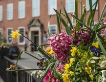 Chester, England - flowers in the streets on a sunny day. This image shows a view of some flowers in the streets in Chester, England, the UK. It was taken on  a Royalty Free Stock Photography