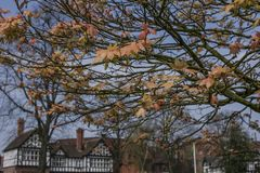 Chester, England, the UK - trees in a park. This image shows a view of some yellow and orange trees in Chester, England, the UK. It was taken on  a beautiful Royalty Free Stock Photos