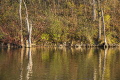 Chester Woods Lake In Autumn Stock Images