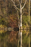 Chester Woods Lake In Autumn Royalty Free Stock Photos