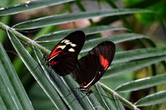 Chester Zoo Butterfly Royalty-vrije Stock Foto