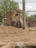 Chester zoo stock images