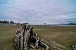 Chesterman Beach Driftwood. Driftwood on Chesterman Beach near Tofino, British Columbia Stock Photos