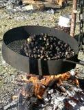Chestntuts ha cucinato sul fuoco Immagine Stock Libera da Diritti
