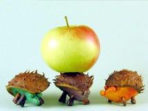 Chestnus hedgehogs stock images