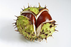 Chestnut. With peel on white Royalty Free Stock Photography