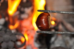 Chestnut. On fire holding by tong Royalty Free Stock Photography