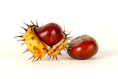 Chestnut. Two chestnuts on a light background Royalty Free Stock Photos
