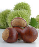 Chestnut Royalty Free Stock Images