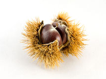 Chestnut. White isolated chestnut, typical food in autumn Royalty Free Stock Images