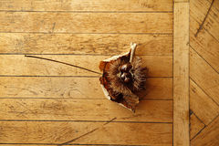 Leaf on wooden floor Stock Image