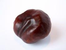 Chestnut. Brown chestnut Stock Photo