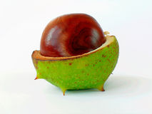 Chestnut-2 Stock Photos