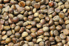 Chestnut. The background of raw chestnuts Stock Images