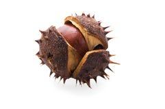 Chestnut Stock Photos