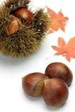 Chestnut. I imaged autumn with chestnut and maple stock image