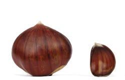 Chestnut. A little chestnut ana a big chestnut royalty free stock photo