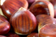 Chestnut Stock Image