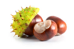 Chestnut. With crust on a white background stock image