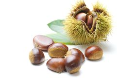 Chestnut. Some chestnut and chestnut bur Stock Photos