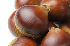 Chestnut. S on the white background Stock Images