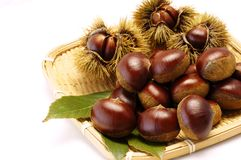 Chestnut. S on the bamboo colander Stock Images