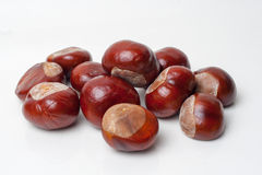 Chestnut stock photography