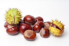Chestnut Royalty Free Stock Photo