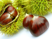 Chestnut. On a white background royalty free stock images