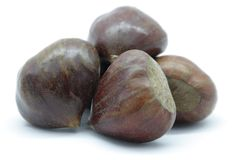 Chestnut. A glossy hard brown nut which develops within a bristly case and can be roasted and eaten stock images