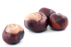 Chestnut. Bronze chestnut on white background in approaching stock photo