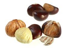 Chestnut. Set macro isolated on white background stock image
